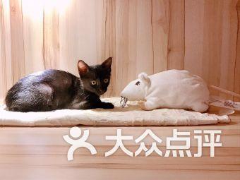 猫托邦度假宠物寄养酒店