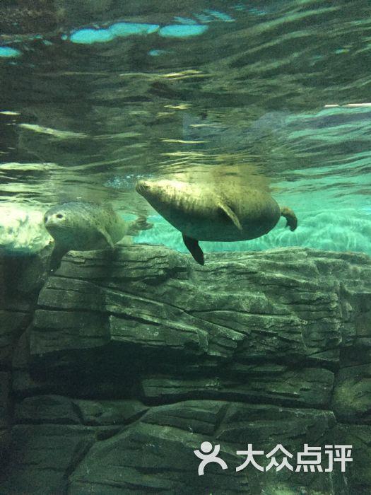 极地海洋动物馆-图片-大连景点-大众点评网