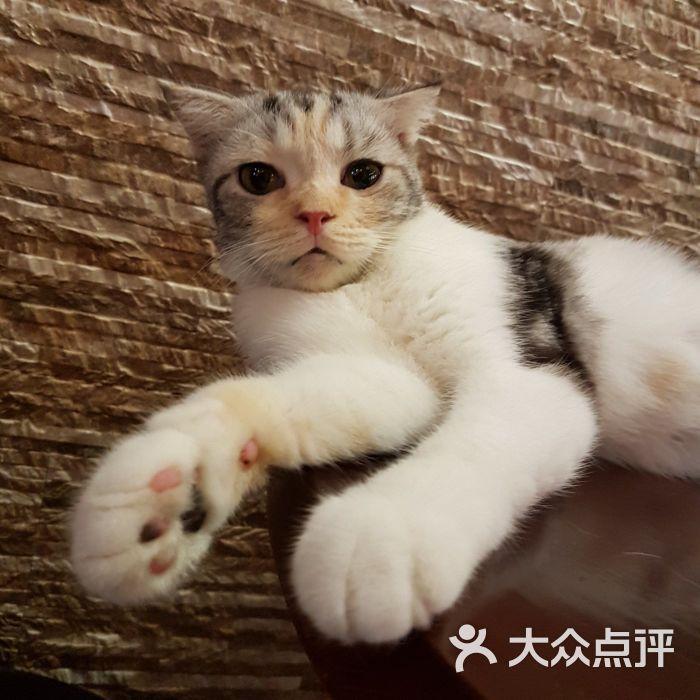 贝斯特宠物猫咪咖啡馆图片 - 第203张