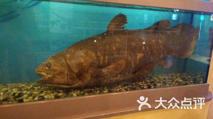 中国古动物馆图片 - 第295张