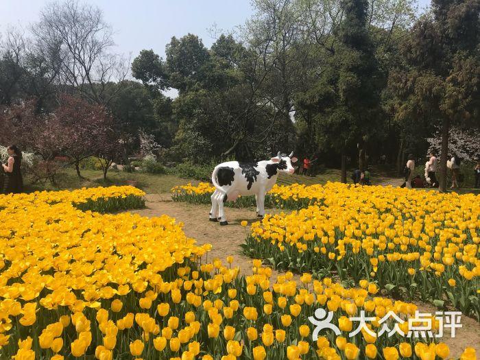 梅园横山风景区景点图片 - 第5张