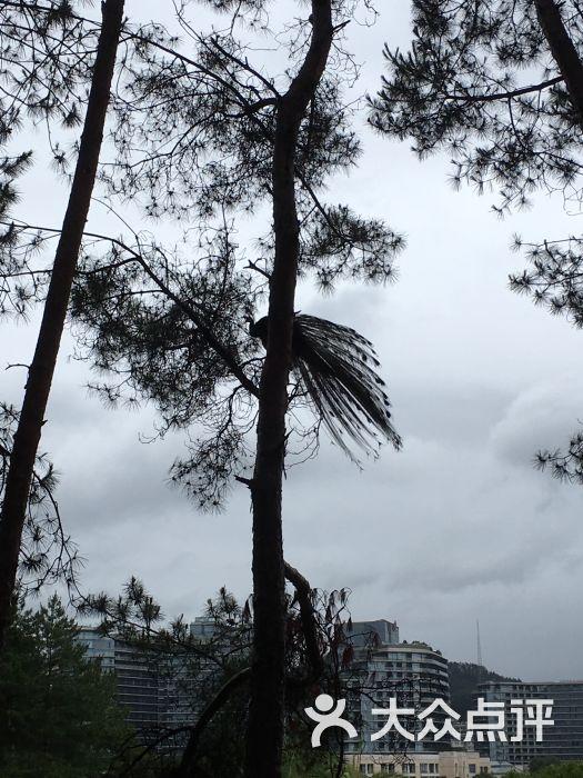 杭州千岛湖开元度假村孔雀图片 - 第9张