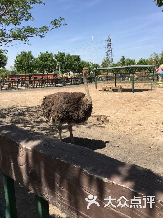 光合谷动物园图片 - 第319张