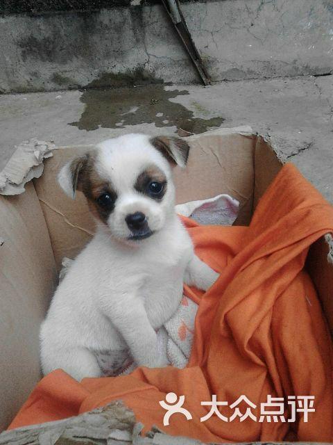 麦秋书吧-可爱的面具小狗-其他-可爱的面具小狗图片