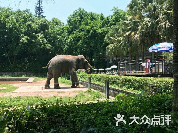重庆动物园图片 - 第3张