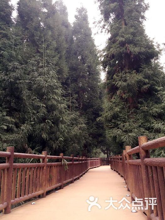 峨眉山七里坪森林栈道景区-图片-洪雅县周边游-大众点评网