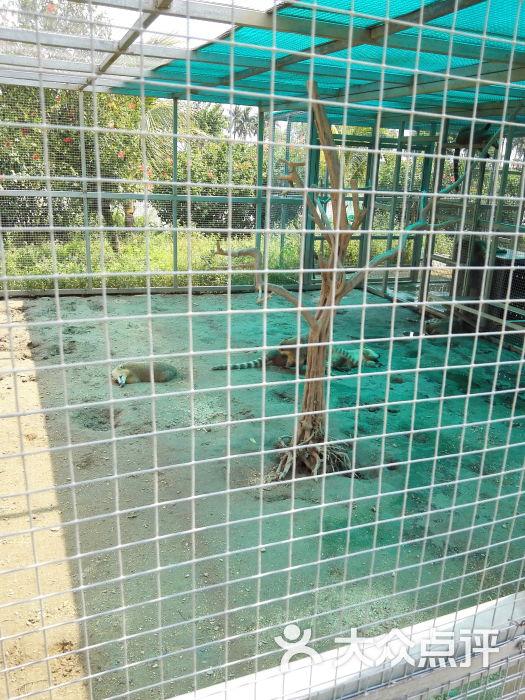 海口天鹅湖动物乐园图片 - 第1张