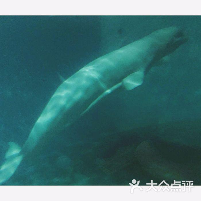 壁纸 动物 海洋动物 鲸鱼 桌面 700_700