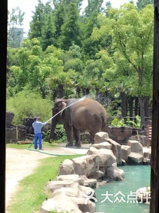 上海野生动物园的全部评价(第8页)-上海-大众点评网