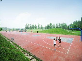 运动公园-篮球场