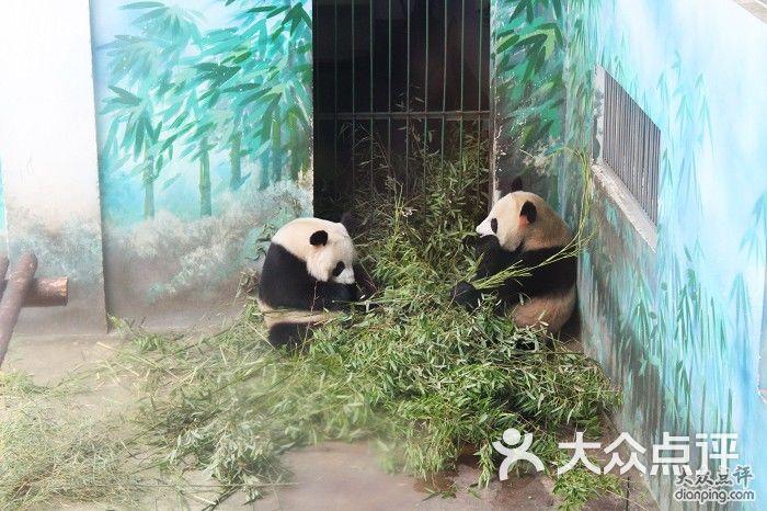 红山森林动物园-熊猫图片-南京周边游-大众点评网
