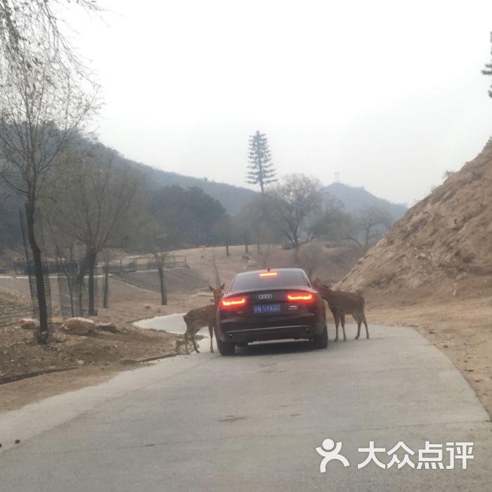 八达岭野生动物园-图片-延庆区周边游-大众点评网