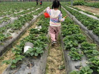 新桥草莓采摘园