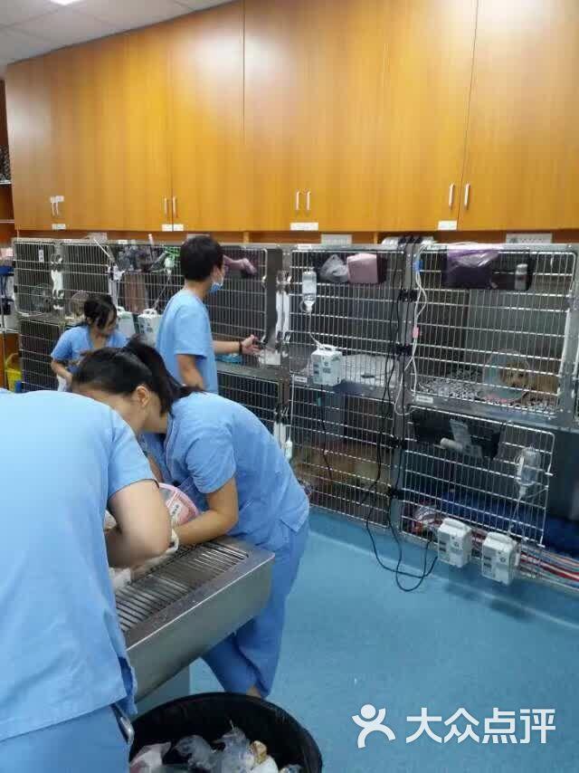 泰洋动物医院-住院区图片-广州宠物-大众点评网