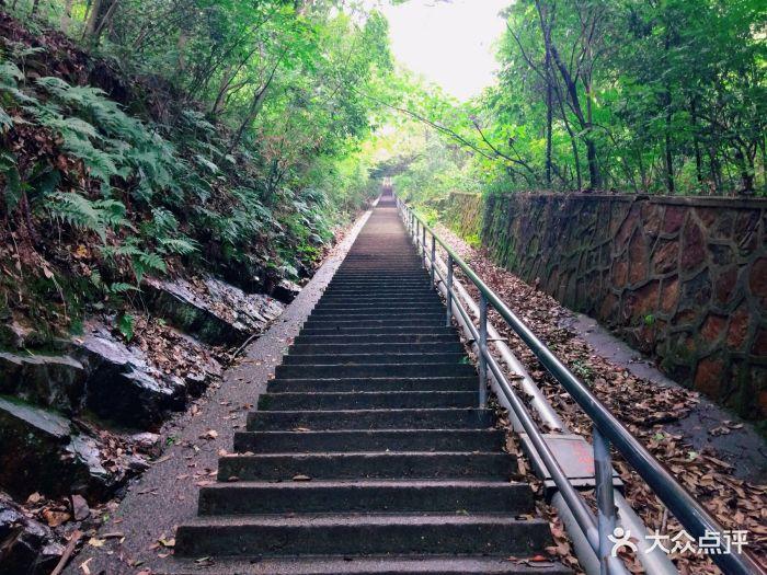 惠山国家森林公园图片 - 第116张