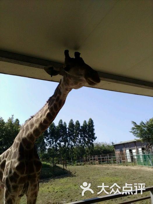 东莞寮步香市动物园图片 - 第296张