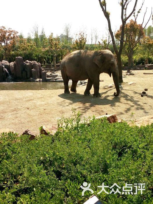 上海野生动物园图片 - 第15629张