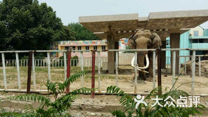 南开区 南开大学 动植物园 动物园 天津动物园 所有点评