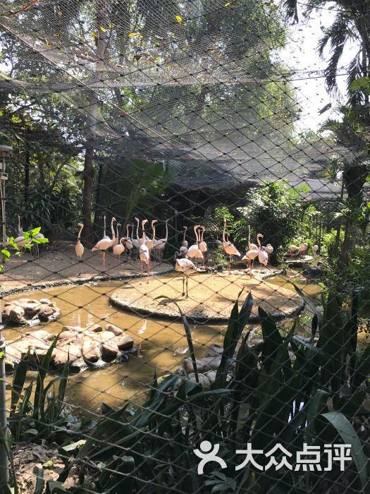 律实动物园图片 - 第4张
