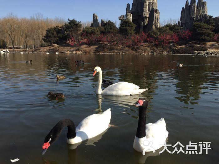 北京野生动物园停车信息,停车费-北京-大众点评网