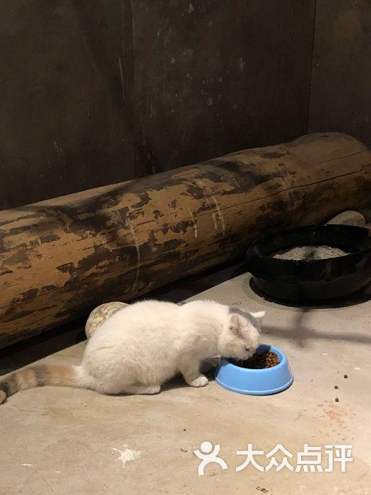 天津zoonly动物主题公园图片 - 第13张