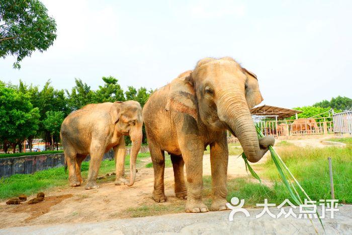 东莞寮步香市动物园图片 - 第8张