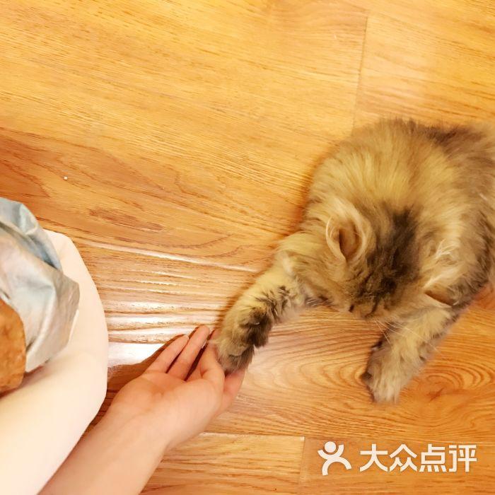 贝斯特猫咪咖啡馆图片 - 第319张