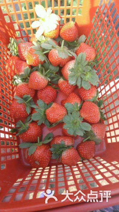 英英草莓园-图片-佛山景点-大众点评网
