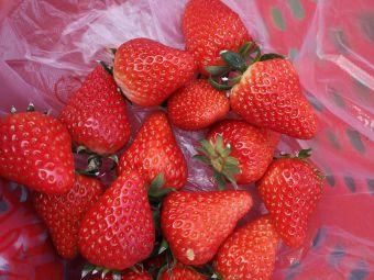 喜洋洋草莓园