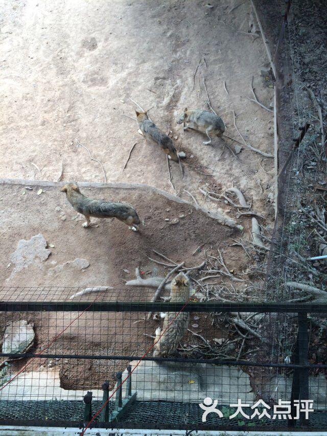 深圳野生动物园怎么样