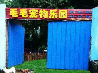 毛毛宠物店(长安店)