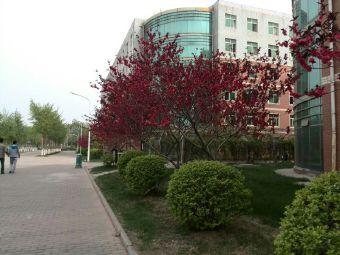 河北大学坤舆园