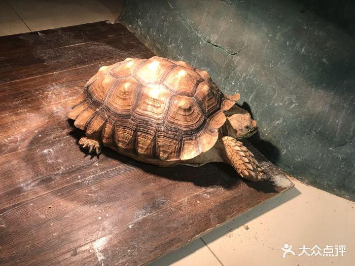 天津zoonly动物主题公园图片 - 第141张