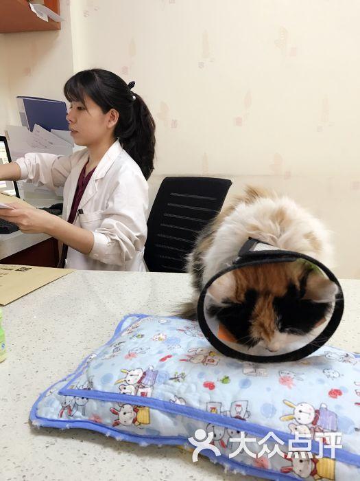 美联众合动物医院有限公司图片 - 第131张