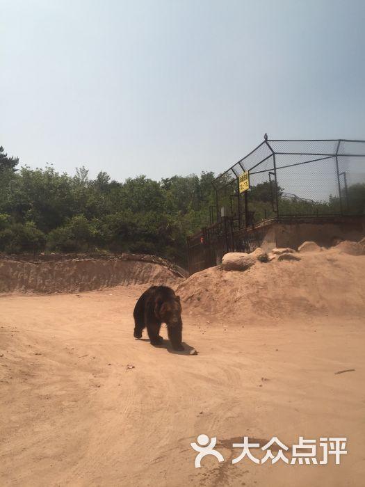 八达岭野生动物园图片 - 第7张