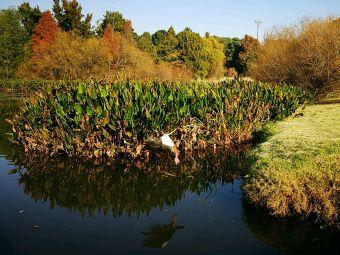 約翰內斯堡植物園及埃瑪倫蒂亞大壩
