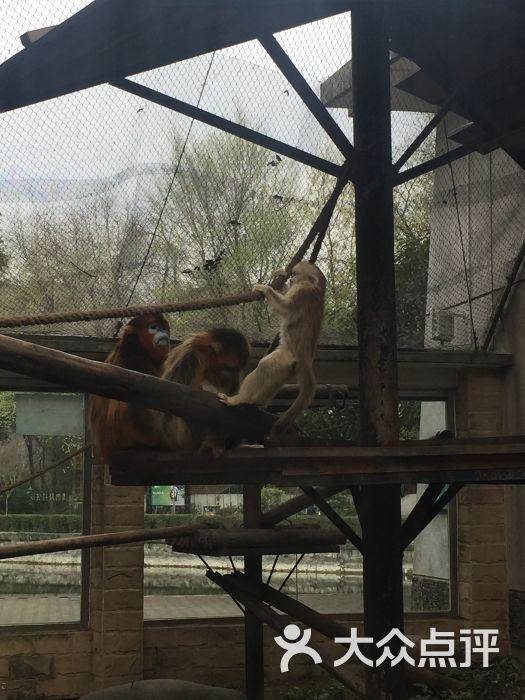 成都动物园景点图片 - 第31张