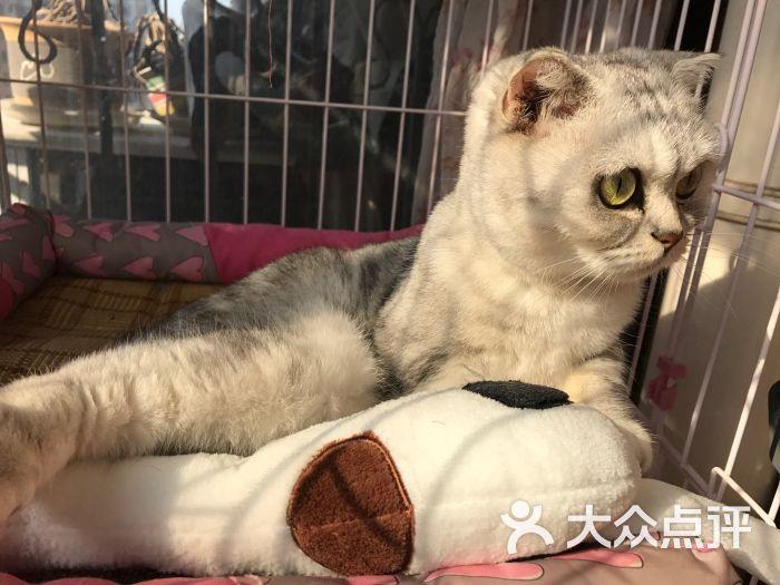 千航轩宠物图片 - 第1张图片