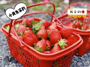 裕南草莓葡萄采摘园