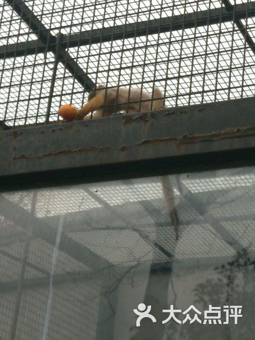 泰州市动物园-图片-泰州周边游-大众点评网