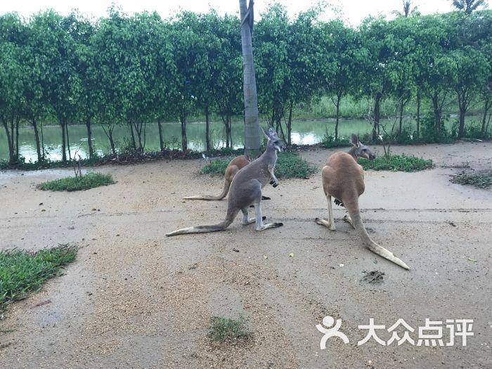 海口天鹅湖动物乐园图片 - 第4张
