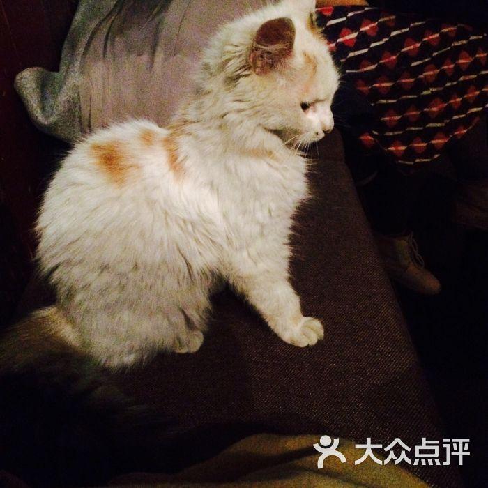 壁纸 动物 狗 狗狗 猫 猫咪 小猫 桌面 700_700
