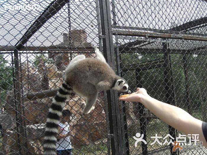 给小动物喂食也不便宜                  08-08-11 上海野生动物园 赞