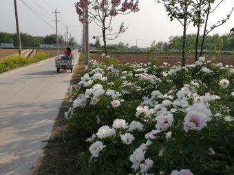 苏集镇白集小学