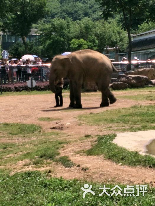 无锡动物园·太湖欢乐园评论图片