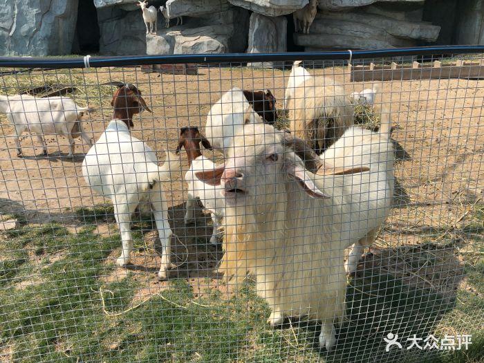 台州湾野生动物园图片 - 第10张