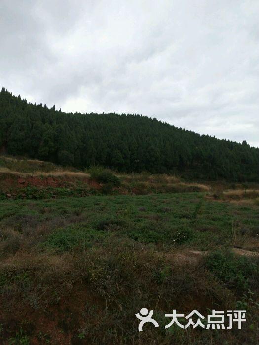 崴螺山森林公园图片 - 第1张