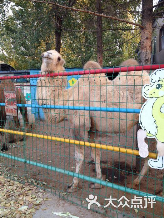 中山公园动物园儿童游乐园-图片-沈阳景点-大众点评