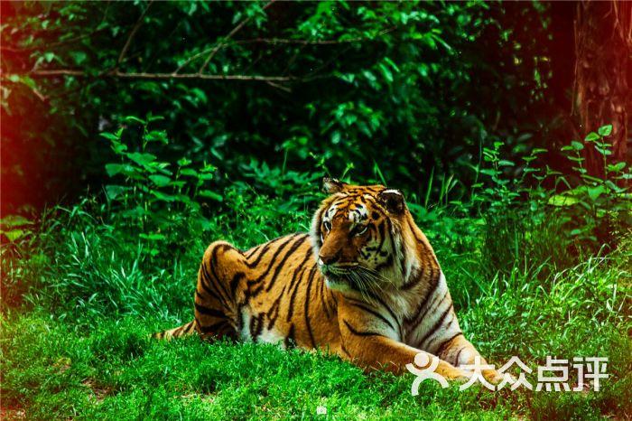 武汉动物园-图片-武汉景点-大众点评网