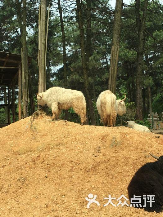 长沙生态动物园图片 - 第28张